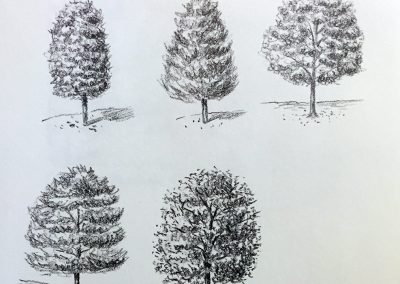 Tree Studies | Pencil Sketch
