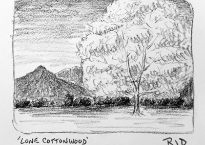 Lone Cottonwood | Pencil Sketch